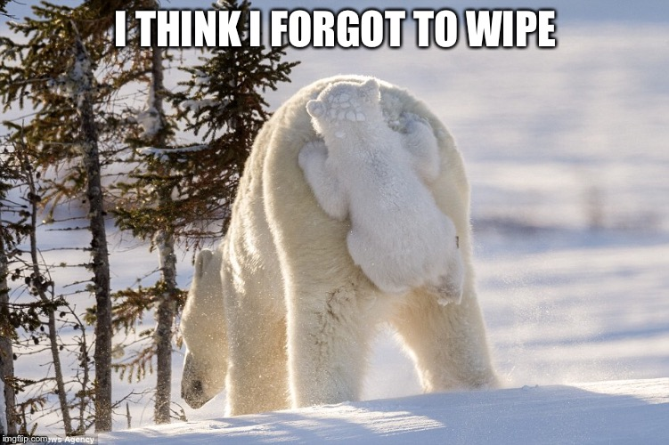 dingle beary | I THINK I FORGOT TO WIPE | image tagged in dingle beary,polar bears,bear memes,memes | made w/ Imgflip meme maker