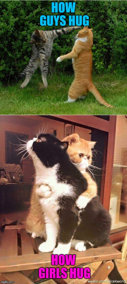 HOW GUYS HUG HOW GIRLS HUG | image tagged in cat fight,cats hugging | made w/ Imgflip meme maker