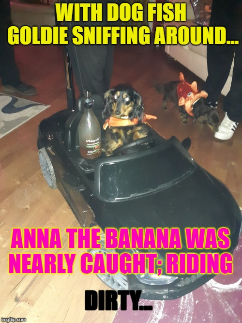 WITH DOG FISH GOLDIE SNIFFING AROUND... ANNA THE BANANA WAS NEARLY CAUGHT; RIDING DIRTY... | image tagged in riding dirty with anna | made w/ Imgflip meme maker