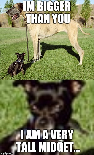 When you meet a very confident dog. | IM BIGGER THAN YOU I AM A VERY TALL MIDGET... | image tagged in funny,animals | made w/ Imgflip meme maker