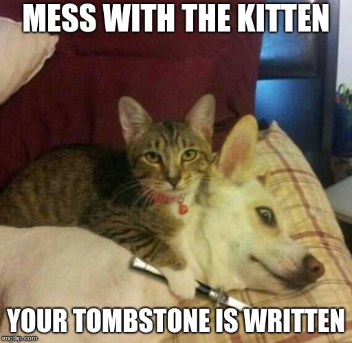MESS WITH THE KITTEN YOUR TOMBSTONE IS WRITTEN | image tagged in funny memes | made w/ Imgflip meme maker