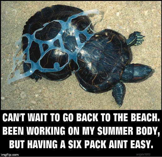 image tagged in turtle,beach body,beach,pollution,abs,summer time | made w/ Imgflip meme maker