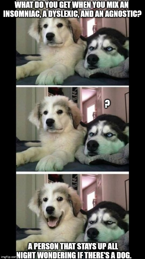 Bad joke dogs | WHAT DO YOU GET WHEN YOU MIX AN INSOMNIAC, A DYSLEXIC, AND AN AGNOSTIC? ? A PERSON THAT STAYS UP ALL NIGHT WONDERING IF THERE'S A DOG. | image tagged in bad joke dogs | made w/ Imgflip meme maker