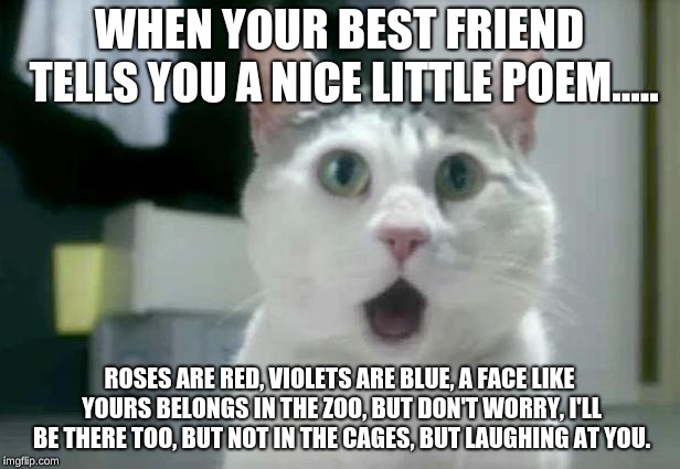 OMG Cat Meme | WHEN YOUR BEST FRIEND TELLS YOU A NICE LITTLE POEM..... ROSES ARE RED, VIOLETS ARE BLUE, A FACE LIKE YOURS BELONGS IN THE ZOO, BUT DON'T WOR | image tagged in memes,omg cat | made w/ Imgflip meme maker