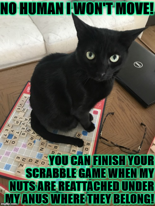 NO HUMAN I WON'T MOVE! YOU CAN FINISH YOUR SCRABBLE GAME WHEN MY NUTS ARE REATTACHED UNDER MY ANUS WHERE THEY BELONG! | image tagged in no human | made w/ Imgflip meme maker