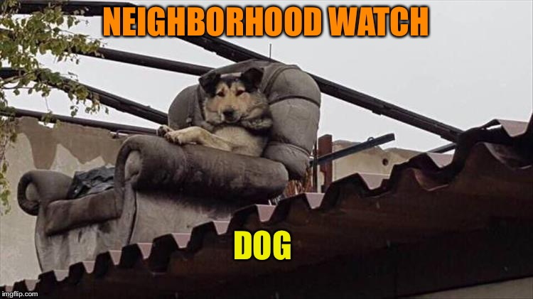 Good doggie! |  NEIGHBORHOOD WATCH; DOG | image tagged in neighborhood,watch dogs,memes,funny | made w/ Imgflip meme maker
