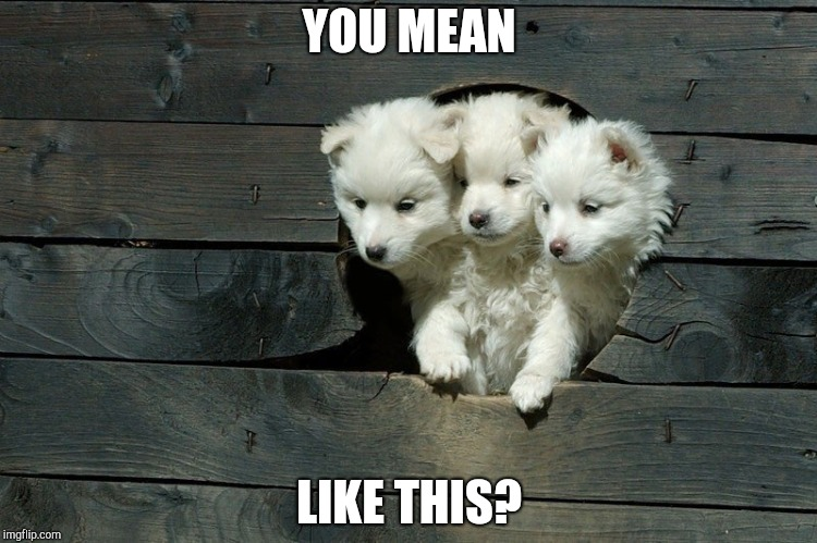 Cerberus Pups | YOU MEAN LIKE THIS? | image tagged in cerberus pups | made w/ Imgflip meme maker