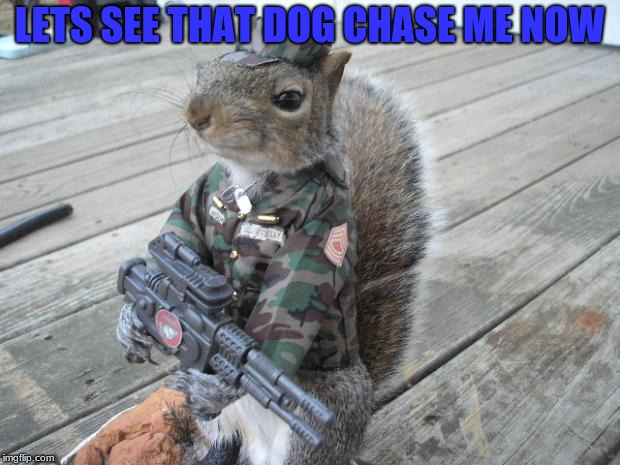Run dog Run Army week (Jan 9th-16th) A NikoBellic event | LETS SEE THAT DOG CHASE ME NOW | image tagged in army squirrel,army week,nikobellic,thanks | made w/ Imgflip meme maker