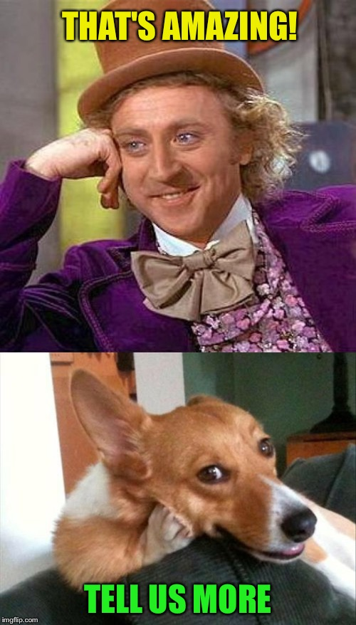 I'm all ears. | THAT'S AMAZING! TELL US MORE | image tagged in memes,creepy condescending wonka,dog,funny | made w/ Imgflip meme maker