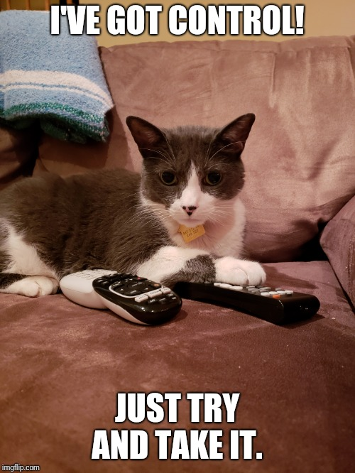 I'VE GOT CONTROL! JUST TRY AND TAKE IT. | image tagged in cats,funny,control | made w/ Imgflip meme maker