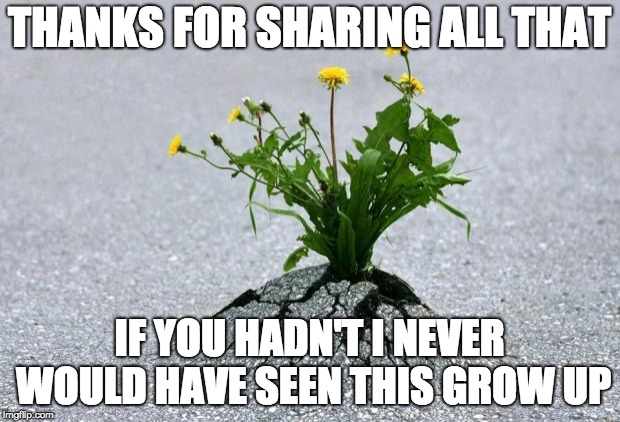 inspirational. | THANKS FOR SHARING ALL THAT IF YOU HADN'T I NEVER WOULD HAVE SEEN THIS GROW UP | image tagged in inspirational | made w/ Imgflip meme maker
