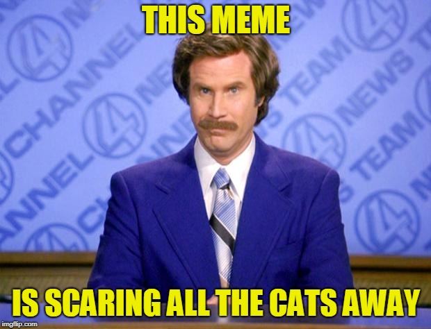 This just in  | THIS MEME IS SCARING ALL THE CATS AWAY | image tagged in this just in | made w/ Imgflip meme maker