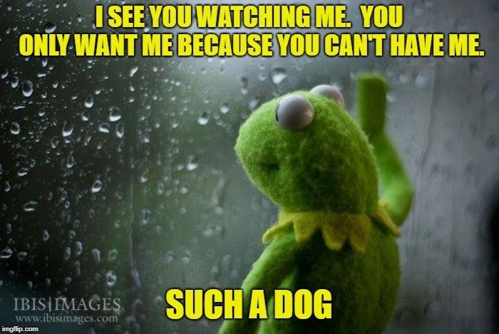 kermit window | I SEE YOU WATCHING ME.  YOU ONLY WANT ME BECAUSE YOU CAN'T HAVE ME. SUCH A DOG | image tagged in kermit window | made w/ Imgflip meme maker