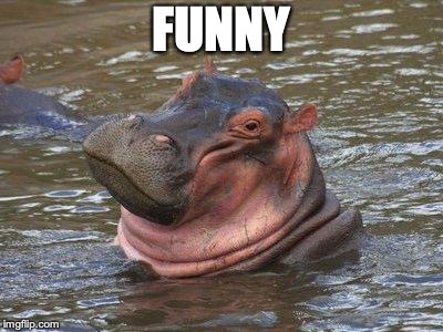 smiling hippo | FUNNY | image tagged in smiling hippo | made w/ Imgflip meme maker