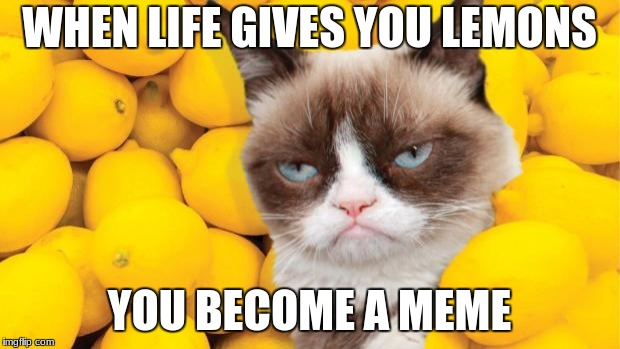 Grumpy Cat lemons | WHEN LIFE GIVES YOU LEMONS YOU BECOME A MEME | image tagged in grumpy cat lemons | made w/ Imgflip meme maker
