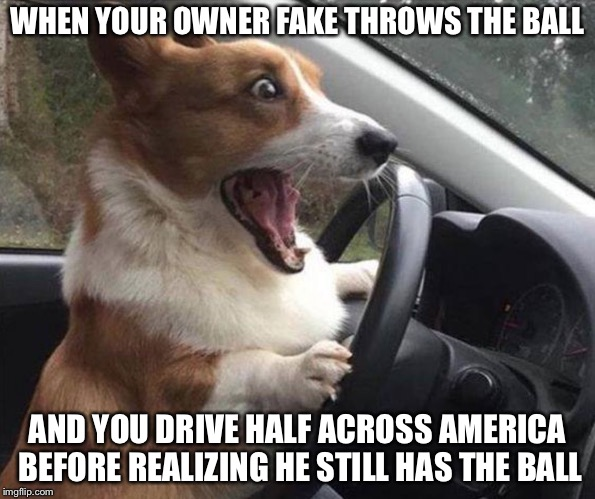 #relatable | WHEN YOUR OWNER FAKE THROWS THE BALL AND YOU DRIVE HALF ACROSS AMERICA BEFORE REALIZING HE STILL HAS THE BALL | image tagged in dog driving | made w/ Imgflip meme maker