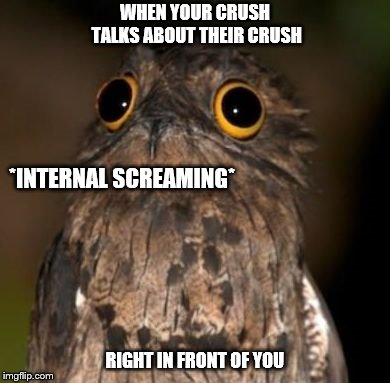 When your crush mentions their crush. | WHEN YOUR CRUSH TALKS ABOUT THEIR CRUSH RIGHT IN FRONT OF YOU *INTERNAL SCREAMING* | image tagged in internal screaming,owl,when your crush,relatable,reaction,feelings | made w/ Imgflip meme maker