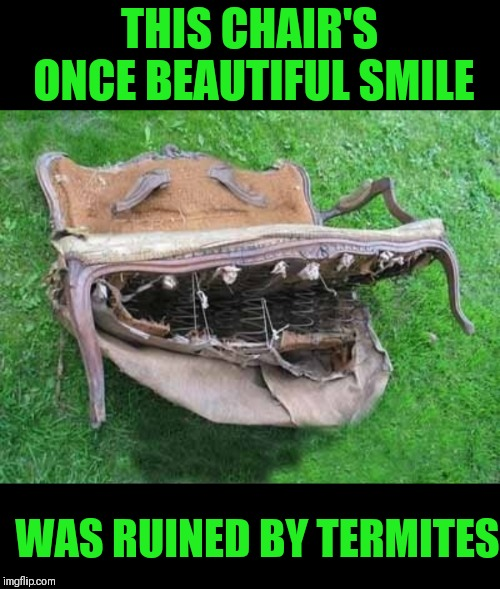Chair Smiling | THIS CHAIR'S ONCE BEAUTIFUL SMILE WAS RUINED BY TERMITES | image tagged in memes,funny,toothless,termites,memes 2019,44colt | made w/ Imgflip meme maker