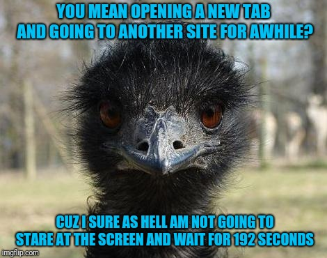 Bad News Emu | YOU MEAN OPENING A NEW TAB AND GOING TO ANOTHER SITE FOR AWHILE? CUZ I SURE AS HELL AM NOT GOING TO STARE AT THE SCREEN AND WAIT FOR 192 SEC | image tagged in bad news emu | made w/ Imgflip meme maker
