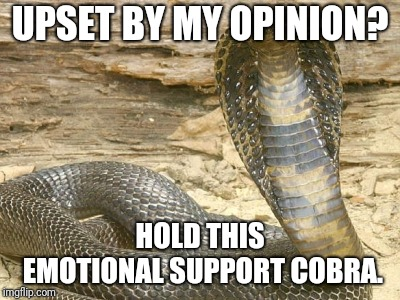 Emotional Support Cobra |  UPSET BY MY OPINION? HOLD THIS EMOTIONAL SUPPORT COBRA. | image tagged in king cobra,trigger,triggered,opinion,feels,i dont care | made w/ Imgflip meme maker