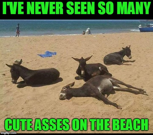 Your ass is full of sand. | I'VE NEVER SEEN SO MANY CUTE ASSES ON THE BEACH | image tagged in dumbasses | made w/ Imgflip meme maker
