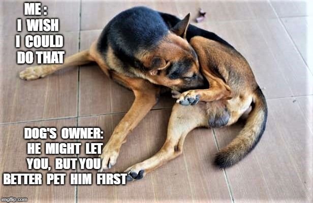 PET HIM FIRST | ME :  I  WISH  I  COULD   DO THAT DOG'S  OWNER:  HE  MIGHT  LET  YOU,  BUT YOU  BETTER  PET  HIM  FIRST | image tagged in dog | made w/ Imgflip meme maker