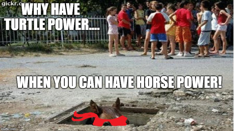I have problems | WHY HAVE TURTLE POWER.... WHEN YOU CAN HAVE HORSE POWER! | image tagged in horse power,teenage mutant ninja turtles,turtle,memes,funny,horse | made w/ Imgflip meme maker