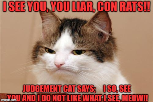 I SEE YOU, YOU LIAR, CON RATS!! JUDGEMENT CAT SAYS;     I SO, SEE YOU AND I DO NOT LIKE WHAT I SEE, MEOW!! | image tagged in judgemental cat | made w/ Imgflip meme maker