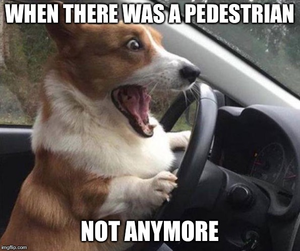 dog driving |  WHEN THERE WAS A PEDESTRIAN; NOT ANYMORE | image tagged in dog driving | made w/ Imgflip meme maker