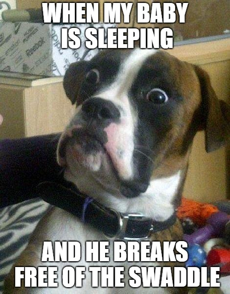 Surprised Dog | WHEN MY BABY IS SLEEPING AND HE BREAKS FREE OF THE SWADDLE | image tagged in surprised dog | made w/ Imgflip meme maker