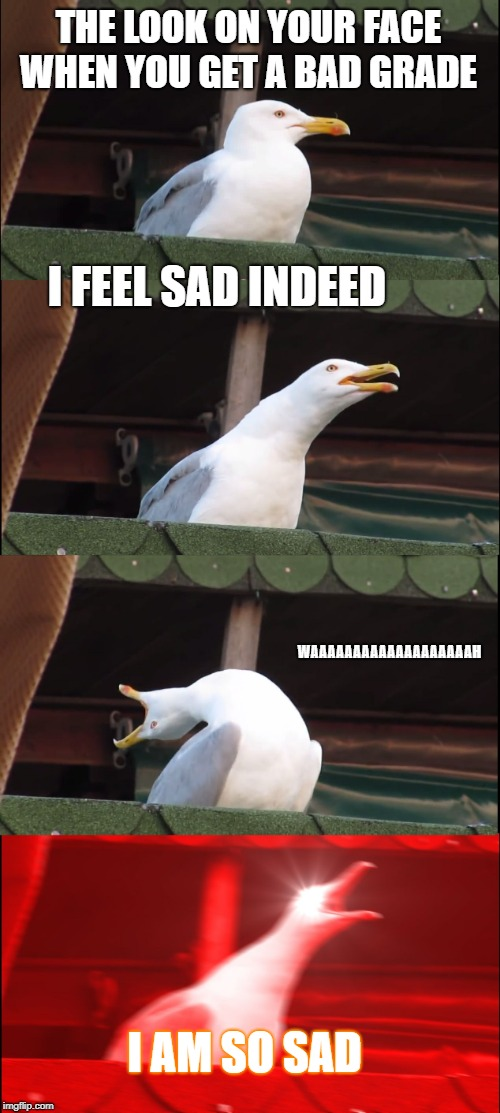 Inhaling Seagull Meme | THE LOOK ON YOUR FACE WHEN YOU GET A BAD GRADE I FEEL SAD INDEED WAAAAAAAAAAAAAAAAAAAH I AM SO SAD | image tagged in memes,inhaling seagull | made w/ Imgflip meme maker