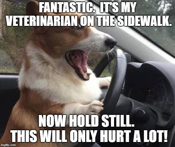 dog driving |  FANTASTIC.  IT'S MY VETERINARIAN ON THE SIDEWALK. NOW HOLD STILL.  THIS WILL ONLY HURT A LOT! | image tagged in dog driving | made w/ Imgflip meme maker