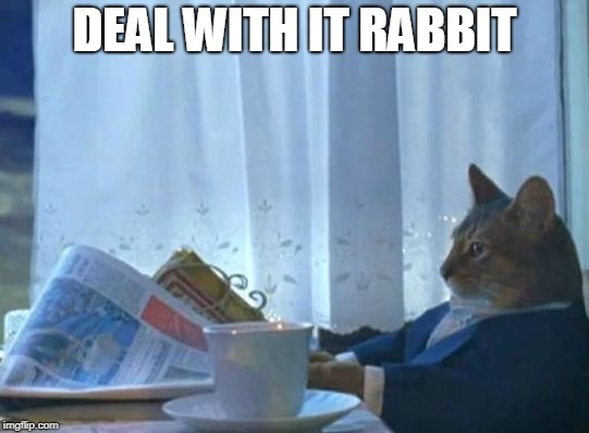 Cat newspaper | DEAL WITH IT RABBIT | image tagged in cat newspaper | made w/ Imgflip meme maker