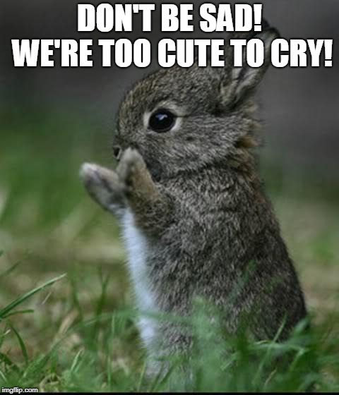 Cute Bunny | DON'T BE SAD! WE'RE TOO CUTE TO CRY! | image tagged in cute bunny | made w/ Imgflip meme maker