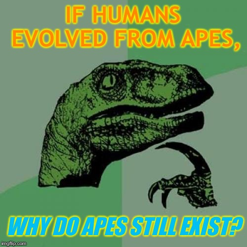 Maybe there was a defect...? | IF HUMANS EVOLVED FROM APES, WHY DO APES STILL EXIST? | image tagged in memes,philosoraptor,funny,evolution,funny because it's true | made w/ Imgflip meme maker