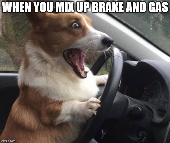 dog driving | WHEN YOU MIX UP BRAKE AND GAS | image tagged in dog driving,car crash,funny meme | made w/ Imgflip meme maker