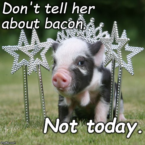 Happy birthday, Princess. | Don't tell her       about bacon. Not today. | image tagged in happy birthday,princess,expectation vs reality,illusions,illusion of control,douglie | made w/ Imgflip meme maker