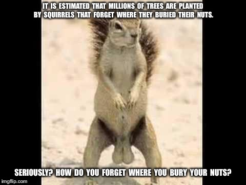 Squirrel nuts |  IT  IS  ESTIMATED  THAT  MILLIONS  OF  TREES  ARE  PLANTED  BY  SQUIRRELS  THAT  FORGET  WHERE  THEY  BURIED  THEIR  NUTS. SERIOUSLY?  HOW  DO  YOU  FORGET  WHERE  YOU  BURY  YOUR  NUTS? | image tagged in squirrel nuts | made w/ Imgflip meme maker