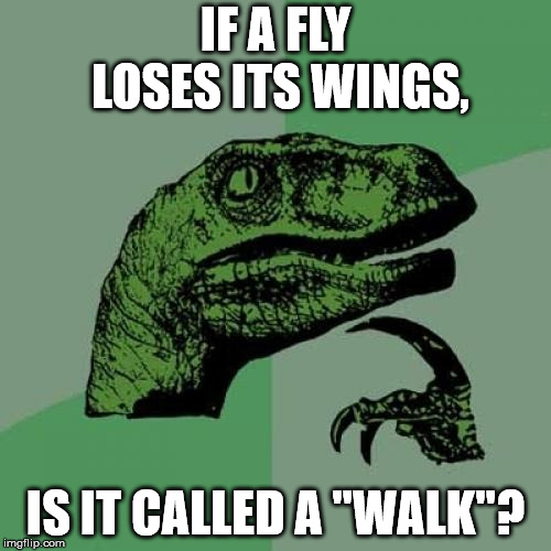 "Original question that's probably been asked a million times | IF A FLY LOSES ITS WINGS, IS IT CALLED A ""WALK""? 