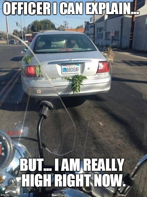 Is Elon Musk Driving? | OFFICER | image tagged in weed | made w/ Imgflip meme maker