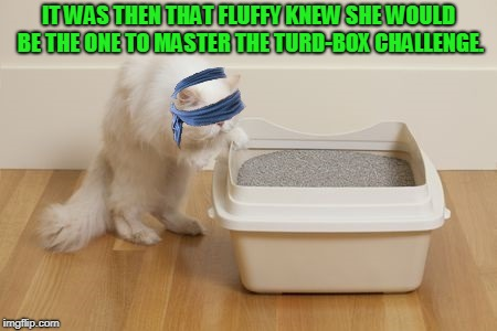 No one is safe from internet challenges! | IT WAS THEN THAT FLUFFY KNEW SHE WOULD BE THE ONE TO MASTER THE TURD-BOX CHALLENGE. | image tagged in turd box challenge,nixieknox,memes,cats | made w/ Imgflip meme maker