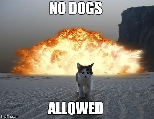 cat explosion | NO DOGS ALLOWED | image tagged in cat explosion | made w/ Imgflip meme maker