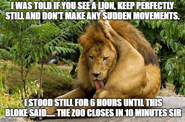 lion licking balls | I WAS TOLD IF YOU SEE A LION, KEEP PERFECTLY STILL AND DON'T MAKE ANY SUDDEN MOVEMENTS. I STOOD STILL FOR 6 HOURS UNTIL THIS BLOKE SAID..... | image tagged in lion licking balls | made w/ Imgflip meme maker