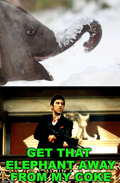 When doing coke, you do not want an elephant around. | GET THAT ELEPHANT AWAY FROM MY COKE | image tagged in scarface,cocaine,elephant,funny,war on drugs,al pacino | made w/ Imgflip meme maker