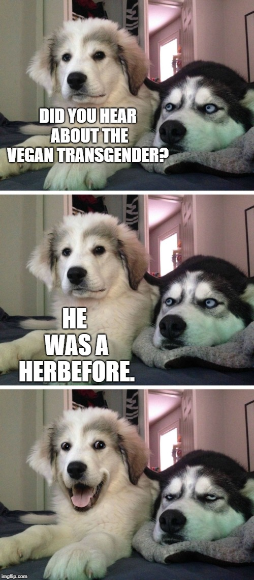Bad Pun day | DID YOU HEAR ABOUT THE VEGAN TRANSGENDER? HE WAS A HERBEFORE. | image tagged in dog bad joke,funny,funny memes | made w/ Imgflip meme maker