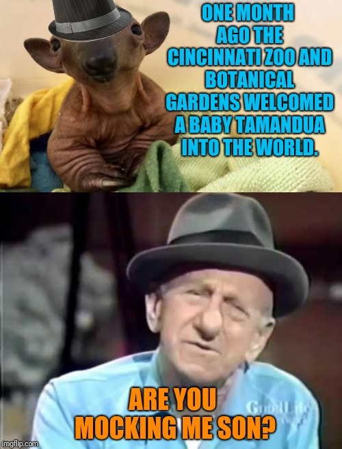 Goodnight Mrs. Calabash, wherever you are. | ONE MONTH AGO THE CINCINNATI ZOO AND BOTANICAL GARDENS WELCOMED A BABY TAMANDUA INTO THE WORLD. ARE YOU MOCKING ME SON? | image tagged in lookalike,zoo | made w/ Imgflip meme maker