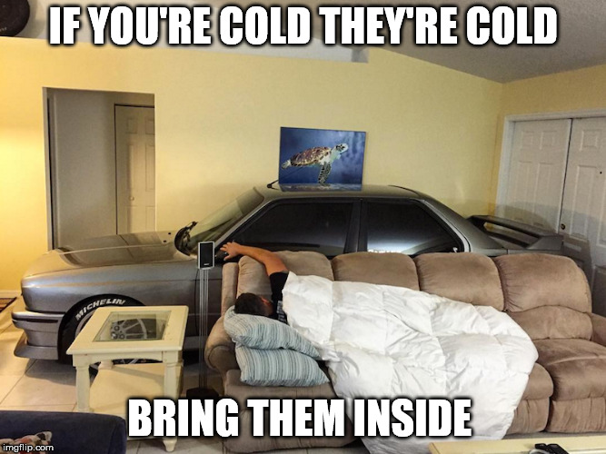 Cold Car | IF YOU'RE COLD THEY'RE COLD BRING THEM INSIDE | image tagged in cold car,winter,freezing,temps,social more media | made w/ Imgflip meme maker