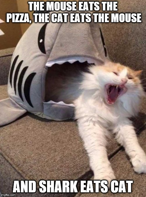 shark eating cat | THE MOUSE EATS THE PIZZA, THE CAT EATS THE MOUSE AND SHARK EATS CAT | image tagged in shark eating cat | made w/ Imgflip meme maker