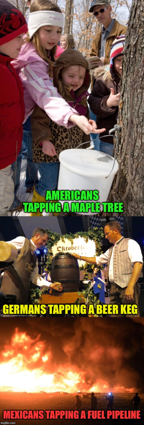 A growing problem apparently. | AMERICANS TAPPING A MAPLE TREE GERMANS TAPPING A BEER KEG MEXICANS TAPPING A FUEL PIPELINE | image tagged in maple syrup,beer,pipeline,memes,funny | made w/ Imgflip meme maker