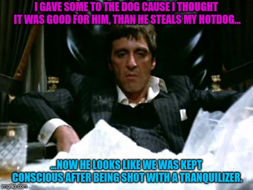Scarface Cocaine | I GAVE SOME TO THE DOG CAUSE I THOUGHT IT WAS GOOD FOR HIM, THAN HE STEALS MY HOTDOG... ...NOW HE LOOKS LIKE WE WAS KEPT CONSCIOUS AFTER BEI | image tagged in scarface cocaine | made w/ Imgflip meme maker